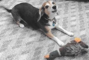 Bailey&duck